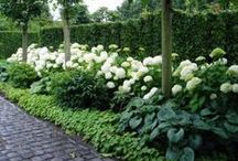 GARDENS / the kinds of gardens, shapes, designs I love, the feeling of naturalness, but with structure and control