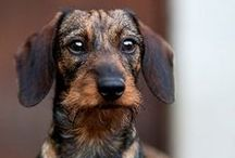 Doggies / by Ivan Mora