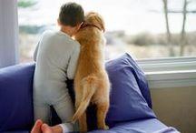 Paws & Puppy Love
