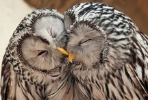 owl obsession / by Kaitie Jean