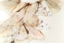 Fairy Wings Jewelry / by Dark Faerie Creations