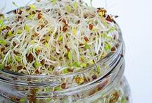 It's a-Sprout Time! / Sprouting in your kitchen is like having a mini garden in the house year round!