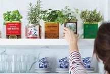 Indoor Garden / Dress up your favorite dishes with fresh herbs from your very own indoor garden!  Check out some tips and tricks-of-the-trade for growing your indoor gardens for fresh herbs and greens, DIY style.