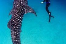 [Diving] Adventure