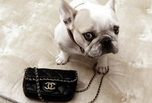 Chanel'd / by Kimberly Whitehead