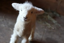 Farm Animals / by Melanie English