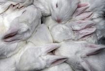Bunnies / by Melanie English