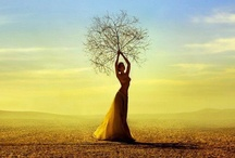 Trees / Trees are a symbol of so much. The roots in the ground, the branches reaching out, a ring for every year, a hiding place for birds, providers of air. / by Marina