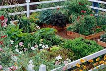 Herbology and Backyard Farming
