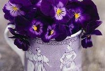 Flowers Hetty B