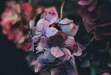Flora / Bouquets & Centerpieces