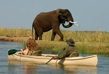 Authentic Safaris / We love to explore! From classic safari destinations like the Serengeti and Masai Mara to top luxury spots like Kruger and the Okavango Delta, authenticity is always key. Discover our amazing African safaris, whether in a adventurous group, as a family, with your partner or on your own.