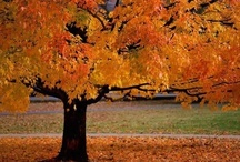 Autumn! My fave / by Lisa Taylor