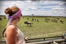 Wildebeest Migration / Book your wildebeest migration tours & safaris with the experts - we know where & when to go and we'll make sure you've got the best position for all the action.