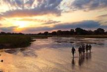Walking Safaris: My African Bucket List / If you have an interest in seeing Africa's big game close up and experience Africa as never before, then this is the ideal opportunity to do so. / by Go2Africa