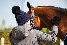 Horse Care / Horse care