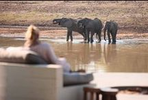 Zambia: We know because we go / Africa Safari Expert Anza Snyman went on a week-long journey to #Zambia where she explored the Lower Zambezi and South Luangwa. These are the lodges she stayed at and some of the amazing experiences she had along the way... / by Go2Africa