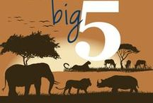 The famous Big 5 animals of Africa / The famous Big Five refers to 5 of Africa's greatest wild animals - the Lion, Leopard, Elephant, Rhino, and Buffalo. / by Go2Africa