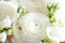 Florals and pretty things... / by Lindsay Rumple