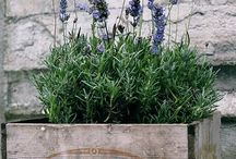 Outdoor Projects / by Cathy Shrader Krupa