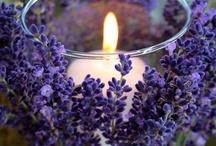 A Purple Wedding. / by Whitney Lorraine
