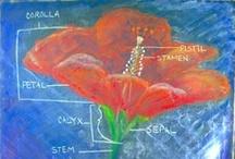 5: Botany / Class 5 Waldorf, study of plants.