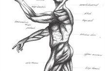 7: Human Biology