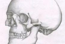 8: Anatomy