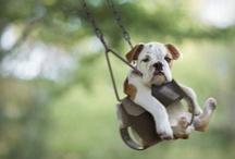 Cute! / by Diana Rambeau