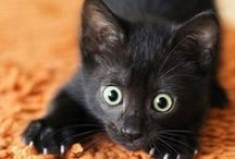 Cats / cats cats and more cats, gotta love the kitties. / by Elitedance