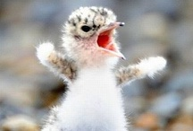 Funny, Super Cute, Warm & Fuzzy Stuff / Lots of fuzzy creatures, funny pics and quotes, happy happy joy joy! / by Elitedance