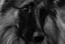 Animal Instincts / by ALDIJANA Fashions