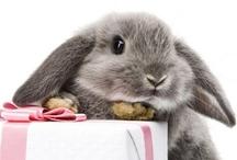 Bunny Cuteness / by Anna Nuttall