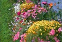 Welcome to my garden! / by Melissa Hampton Pulsfort