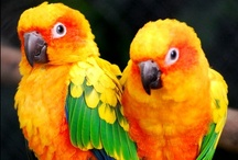 Beautiful Birds / by Debbie Lunsford