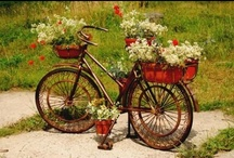 Bicycles / by Debbie Lunsford