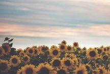 Sun, Yellow, and Sunflowers / all things that describe my love for yellow :) / by Moriah Biggs