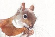 Eichhörnchen / Eichhörnchen sind so witzige Tiere. Und so süß.