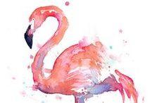 Flamingo / Alles rund um Flamingos.