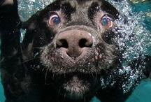 Dog Obsession / by Amanda Santiago