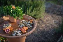 Outdoors &  Gardening / Garden ideas and inspirations