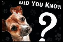 Did you know ....? / What we feel is important for you to know.