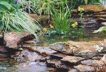 Garden:  Yard / Gardening ideas / by Karin Leach