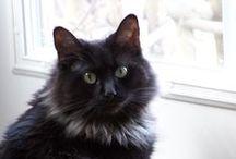 Cat-tastic!! / Ellie