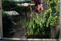 Home - Yard & Garden