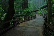Life - Paths