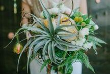 Fresh flowers & plants