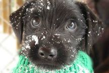 Precious puppy / by Anastasia Hacker