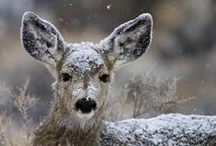Bambi !!!