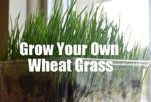 HEALTH: WHEAT GRASS  / by Terlyn Strong Dufrene